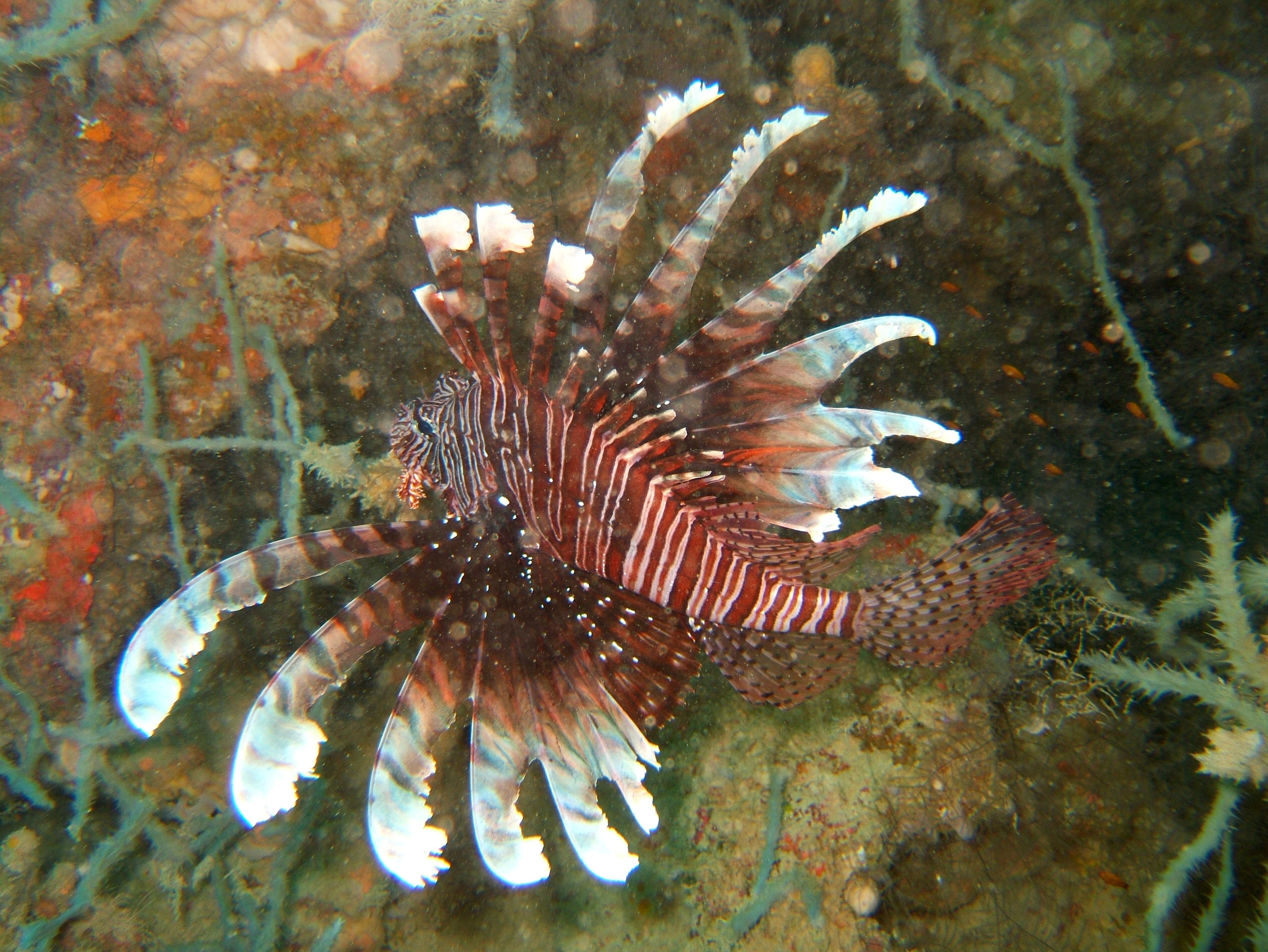 Philippines Cebu Bohol Balicasag Island Rudys rock dive Dec 2005 23