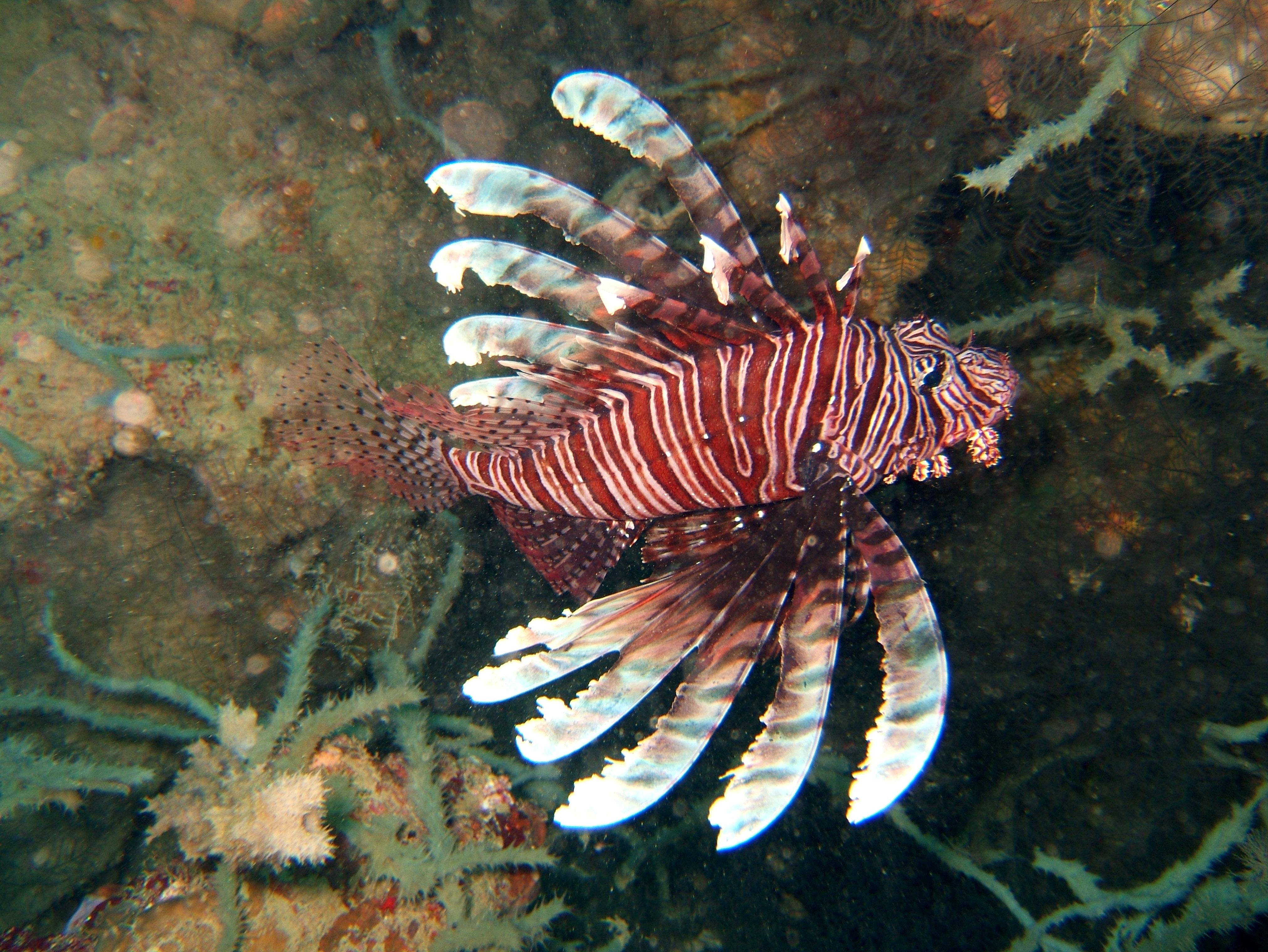 Philippines Cebu Bohol Balicasag Island Rudys rock dive Dec 2005 26