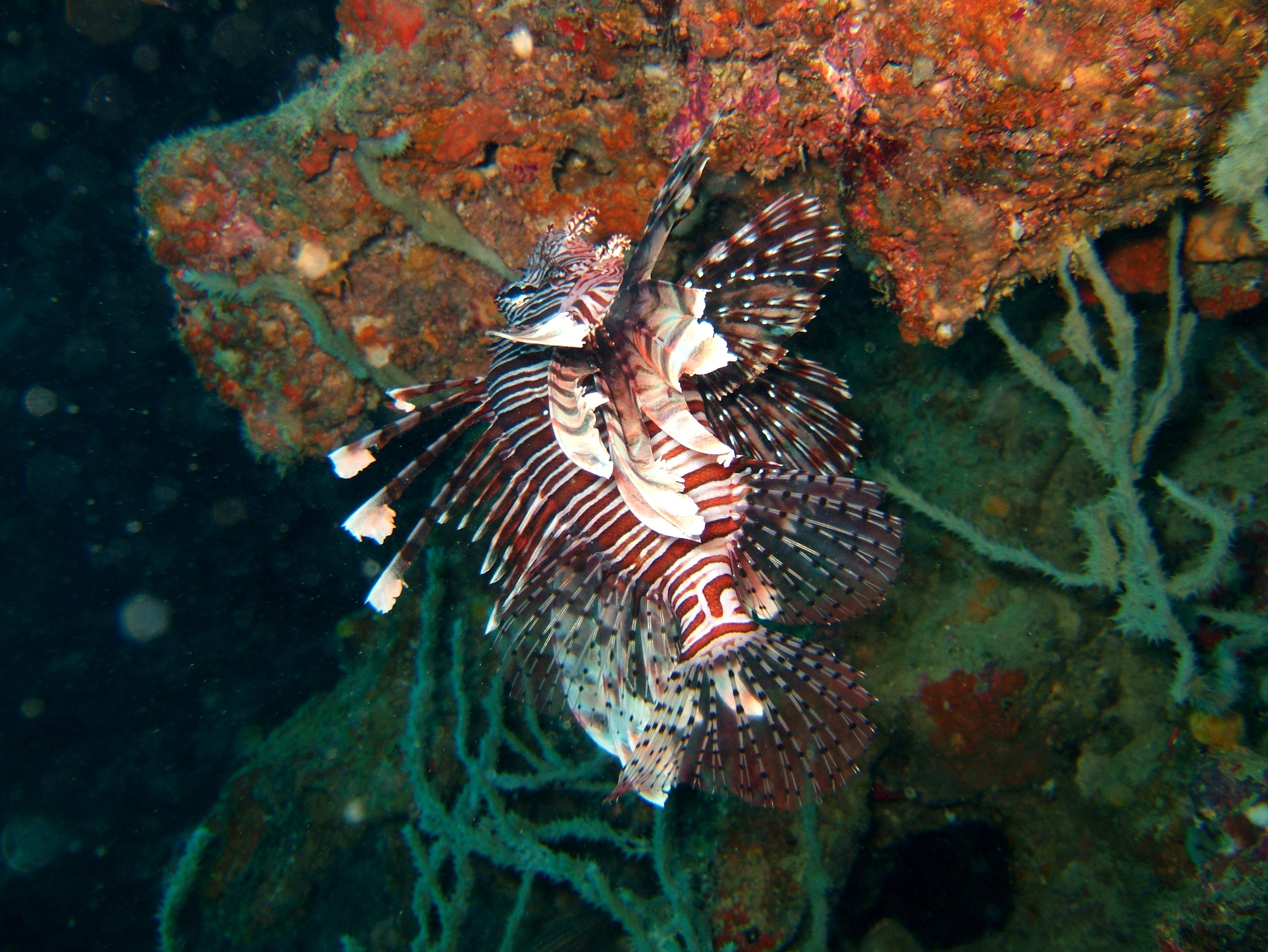 Philippines Cebu Bohol Balicasag Island Rudys rock dive Dec 2005 28