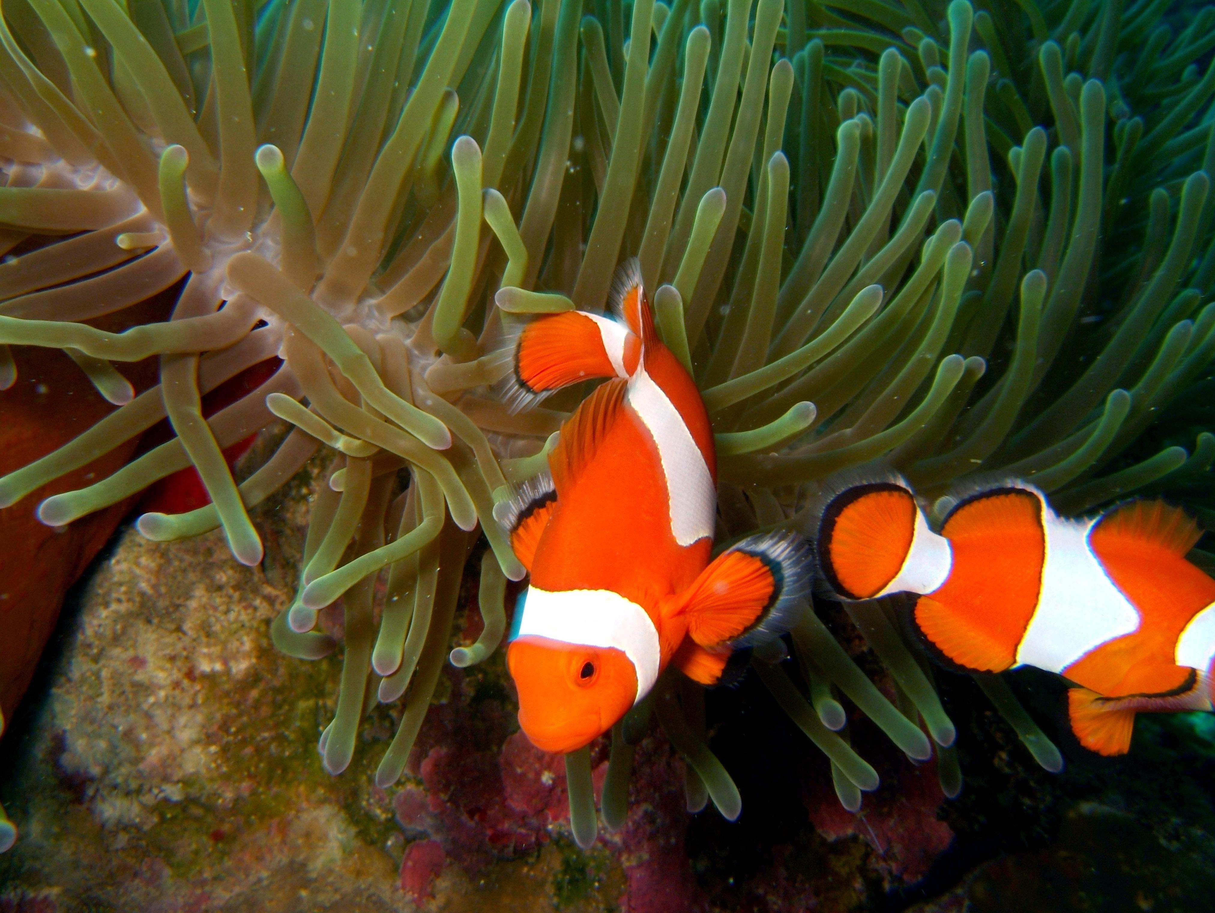 Philippines Cebu Bohol Balicasag Island Rudys rock dive Dec 2005 33