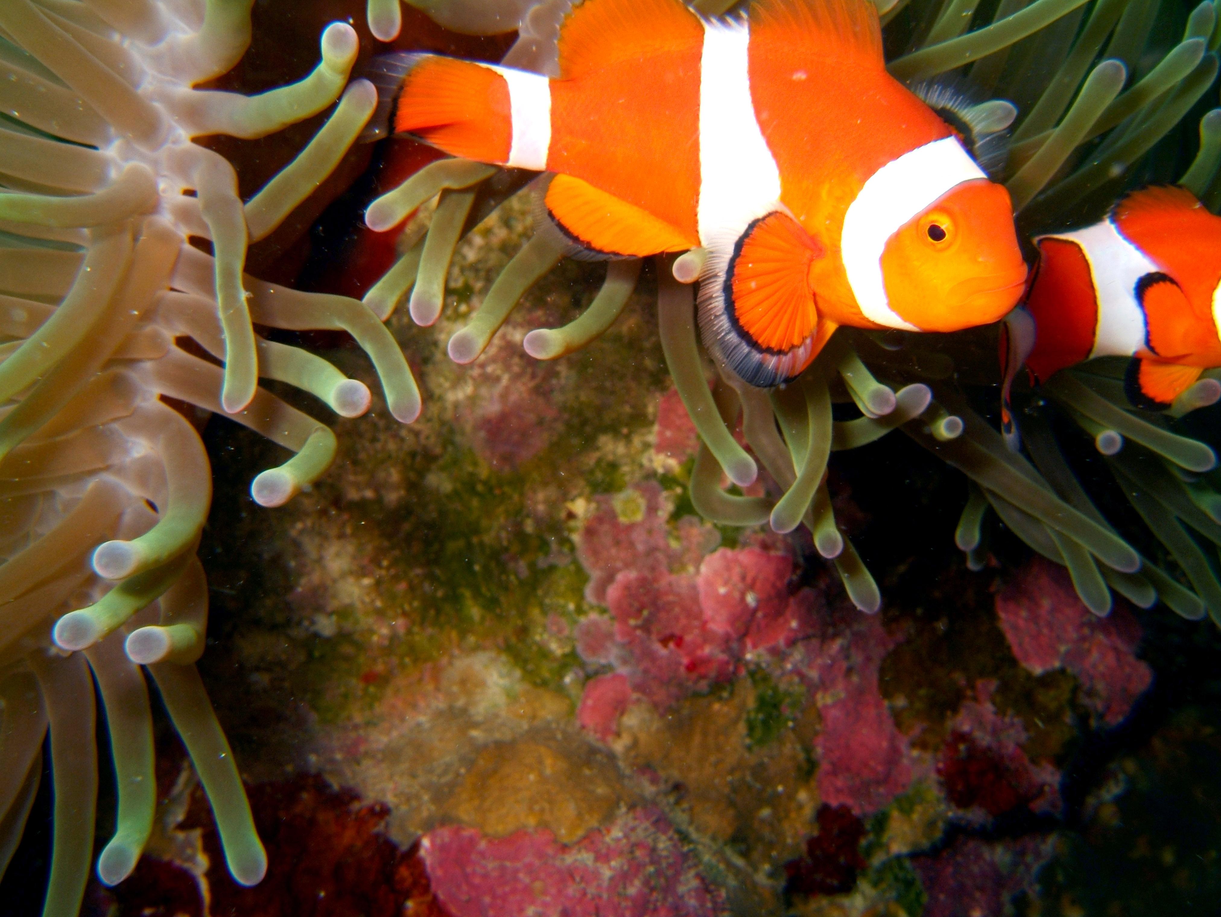 Philippines Cebu Bohol Balicasag Island Rudys rock dive Dec 2005 34