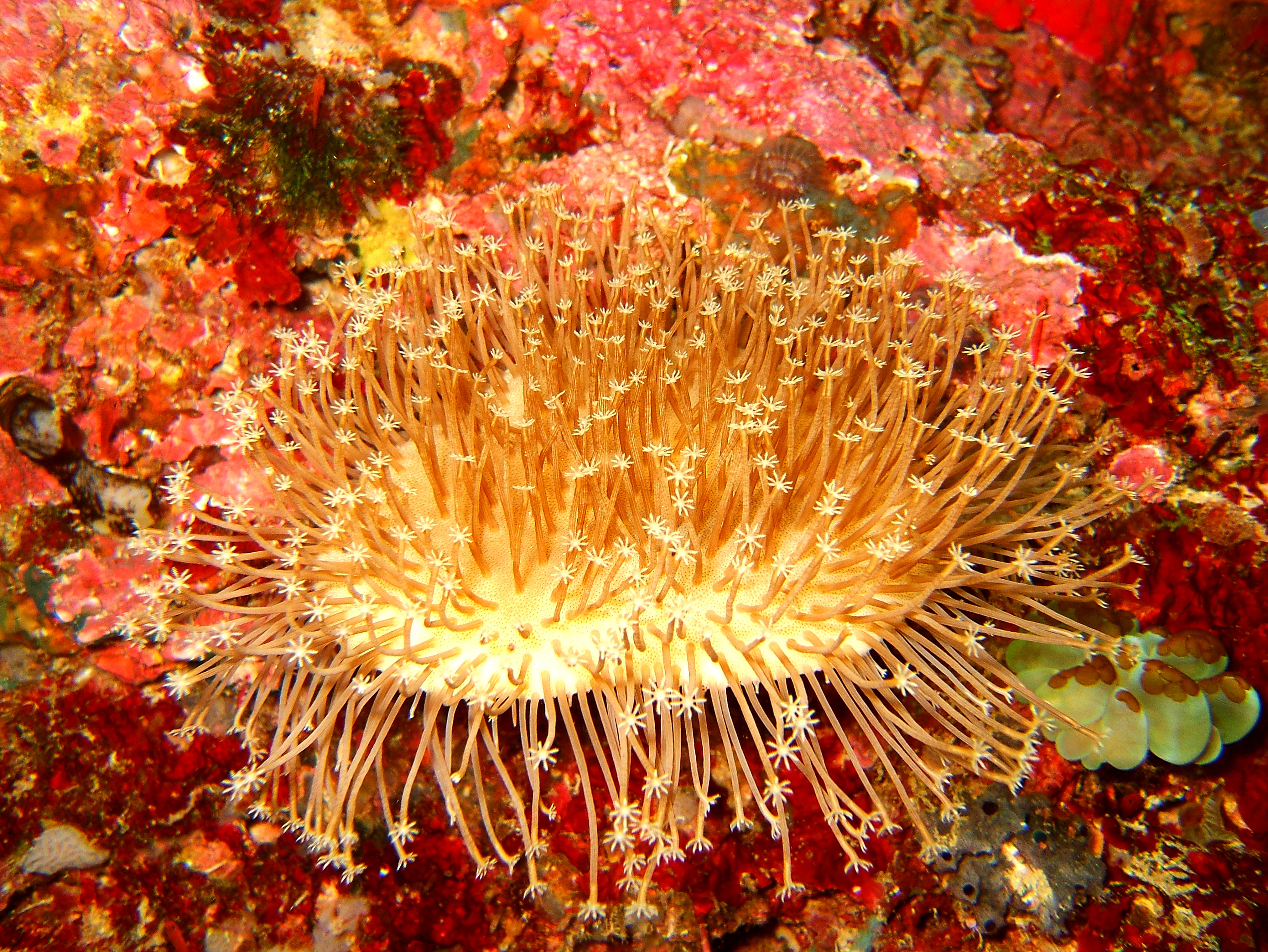 Philippines Cebu Moal Boal 20051226 Dive 1 Kasai Point 12