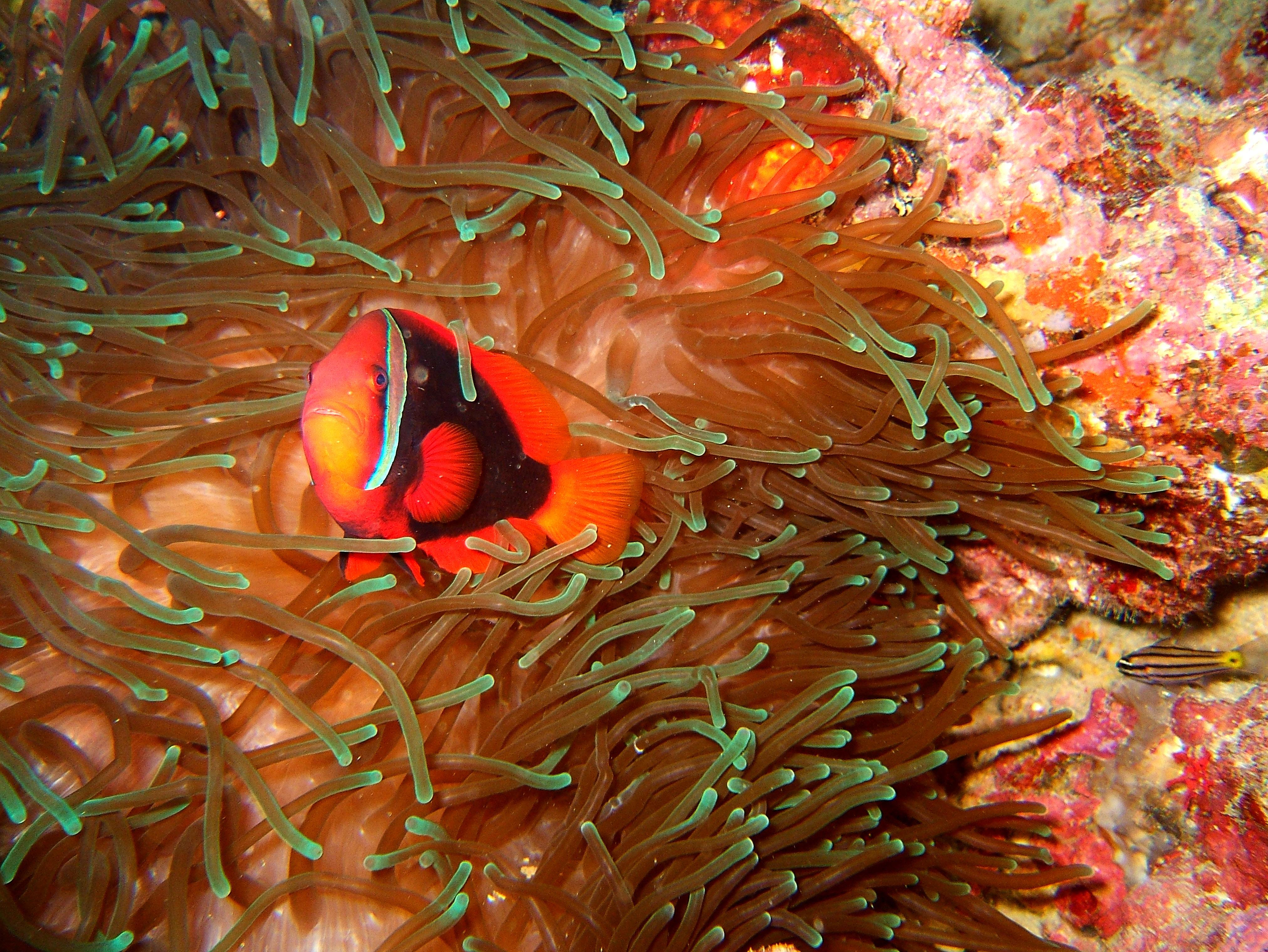 Philippines Cebu Moal Boal 20051226 Dive 1 Kasai Point 28