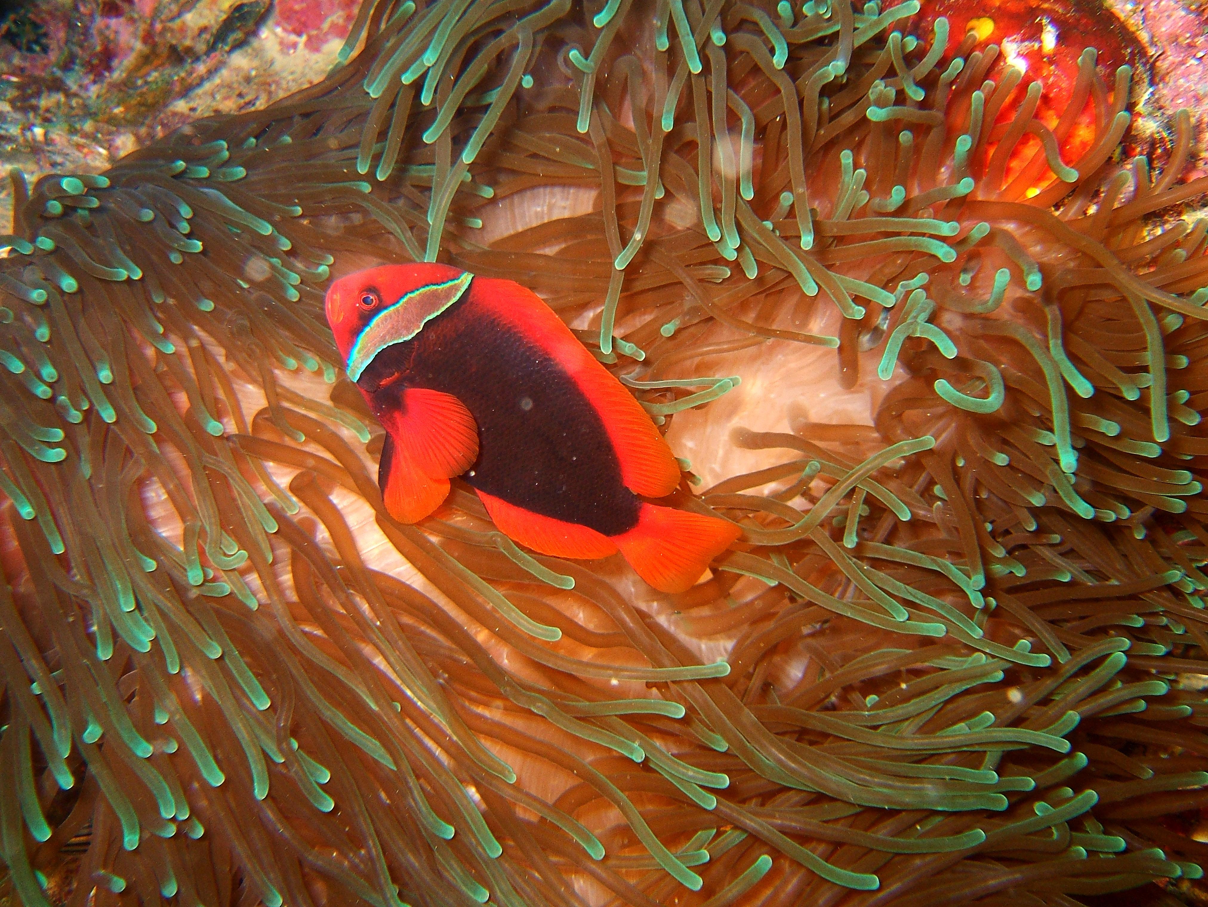 Philippines Cebu Moal Boal 20051226 Dive 1 Kasai Point 31