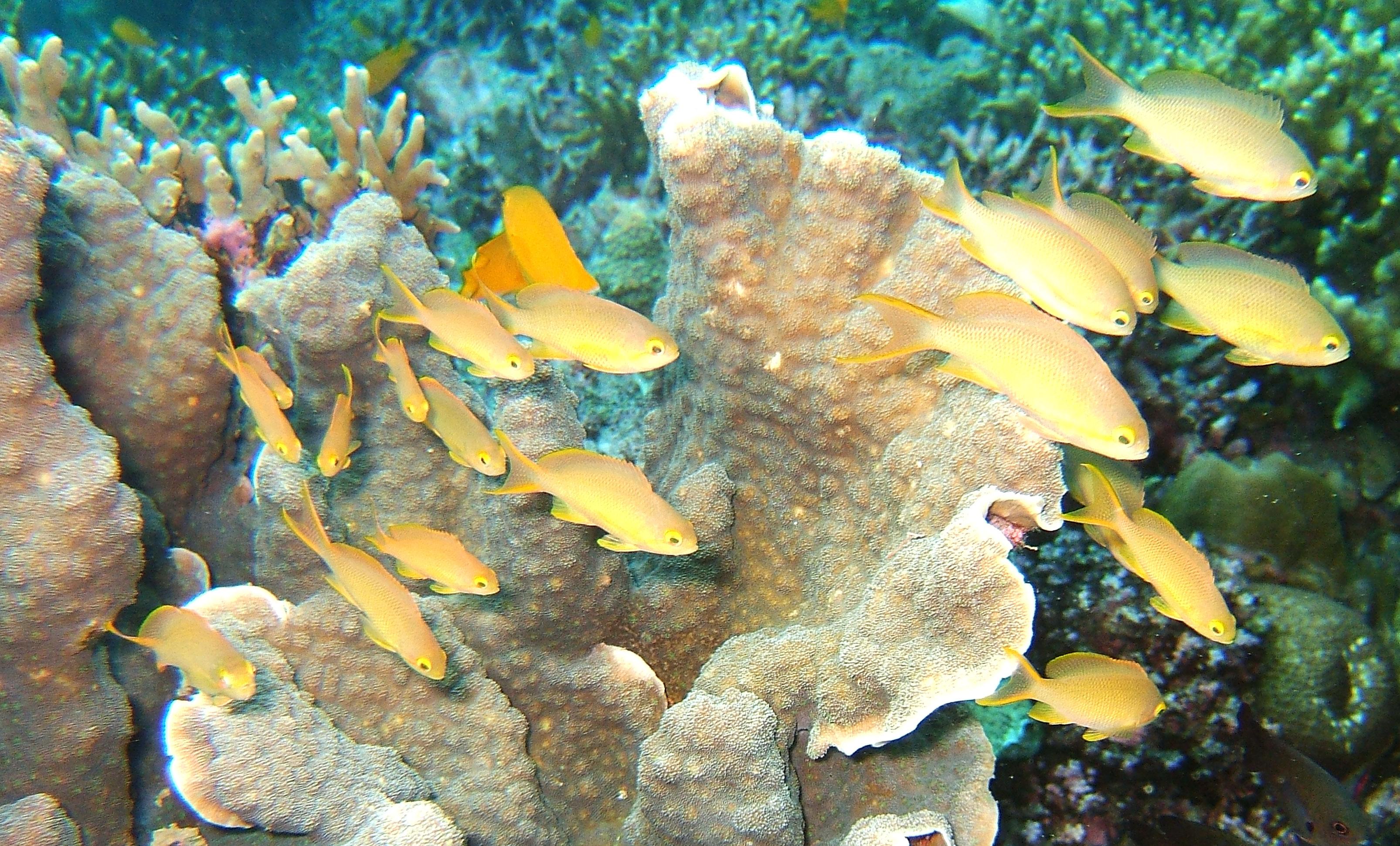 Philippines Cebu Moal Boal 20051226 Dive 1 Kasai Point 36