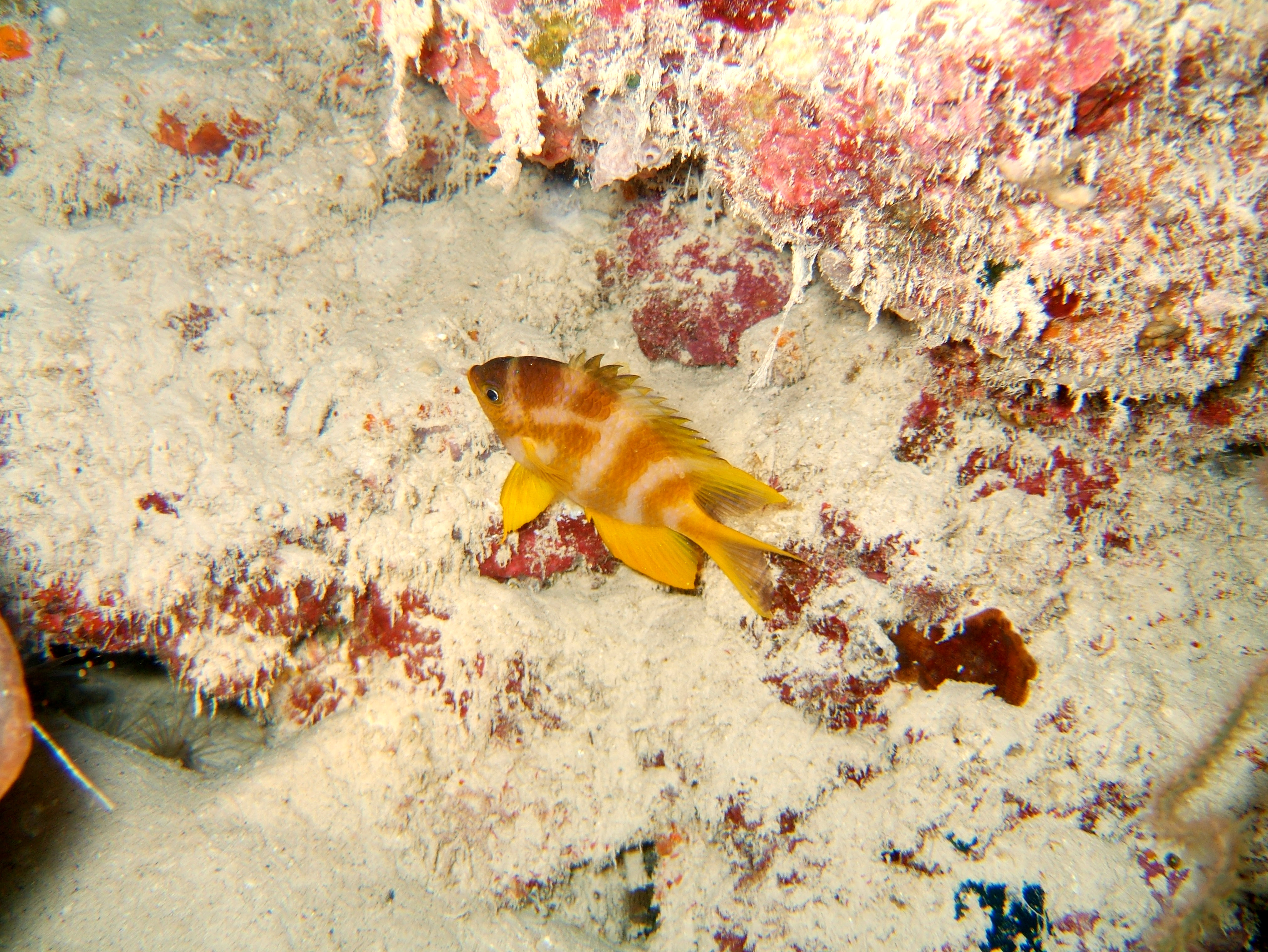 Philippines Cebu Moal Boal 20051226 Dive 2 Talisay Point Night Dive 25