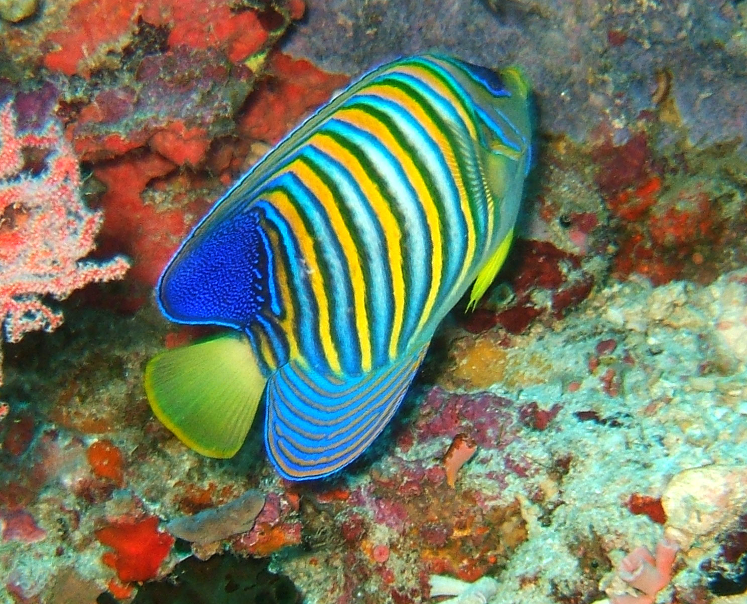 Philippines Cebu Moal Boal 20051227 Dive 1 Pescador Island 09