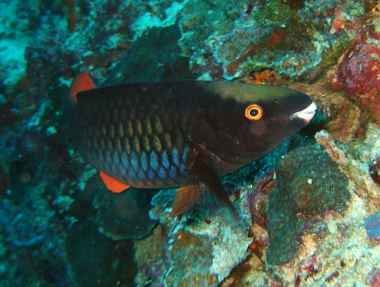 Philippines Cebu Moal Boal 20051227 Dive 1 Pescador Island 12