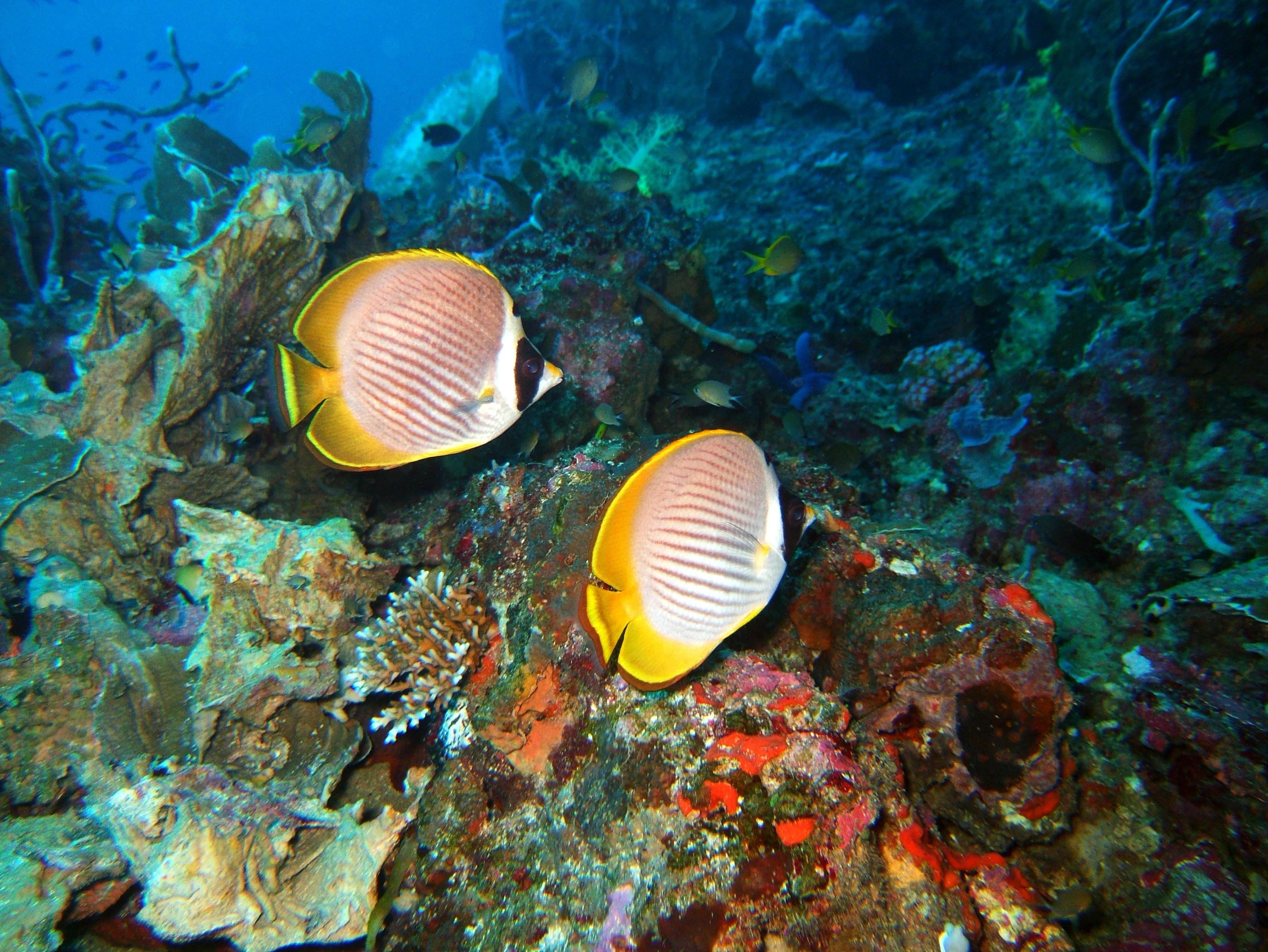 Philippines Cebu Moal Boal 20051227 Dive 1 Pescador Island 17
