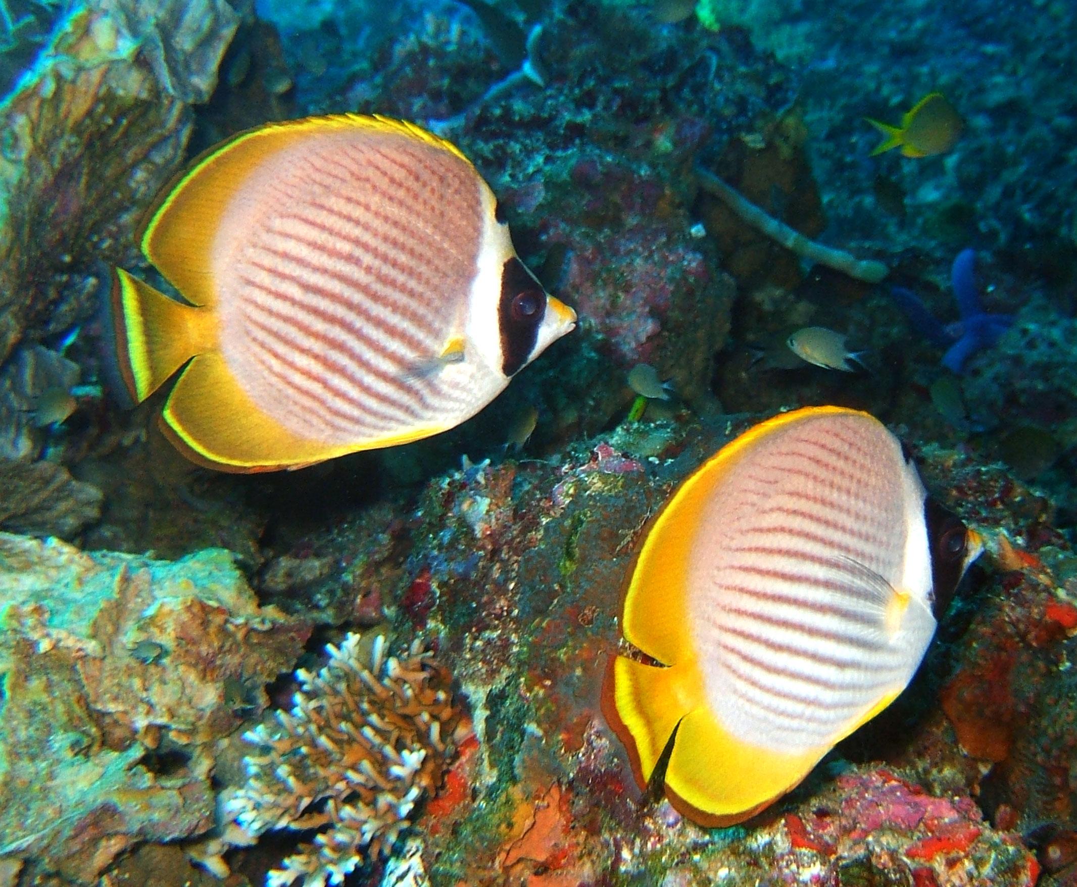 Philippines Cebu Moal Boal 20051227 Dive 1 Pescador Island 18