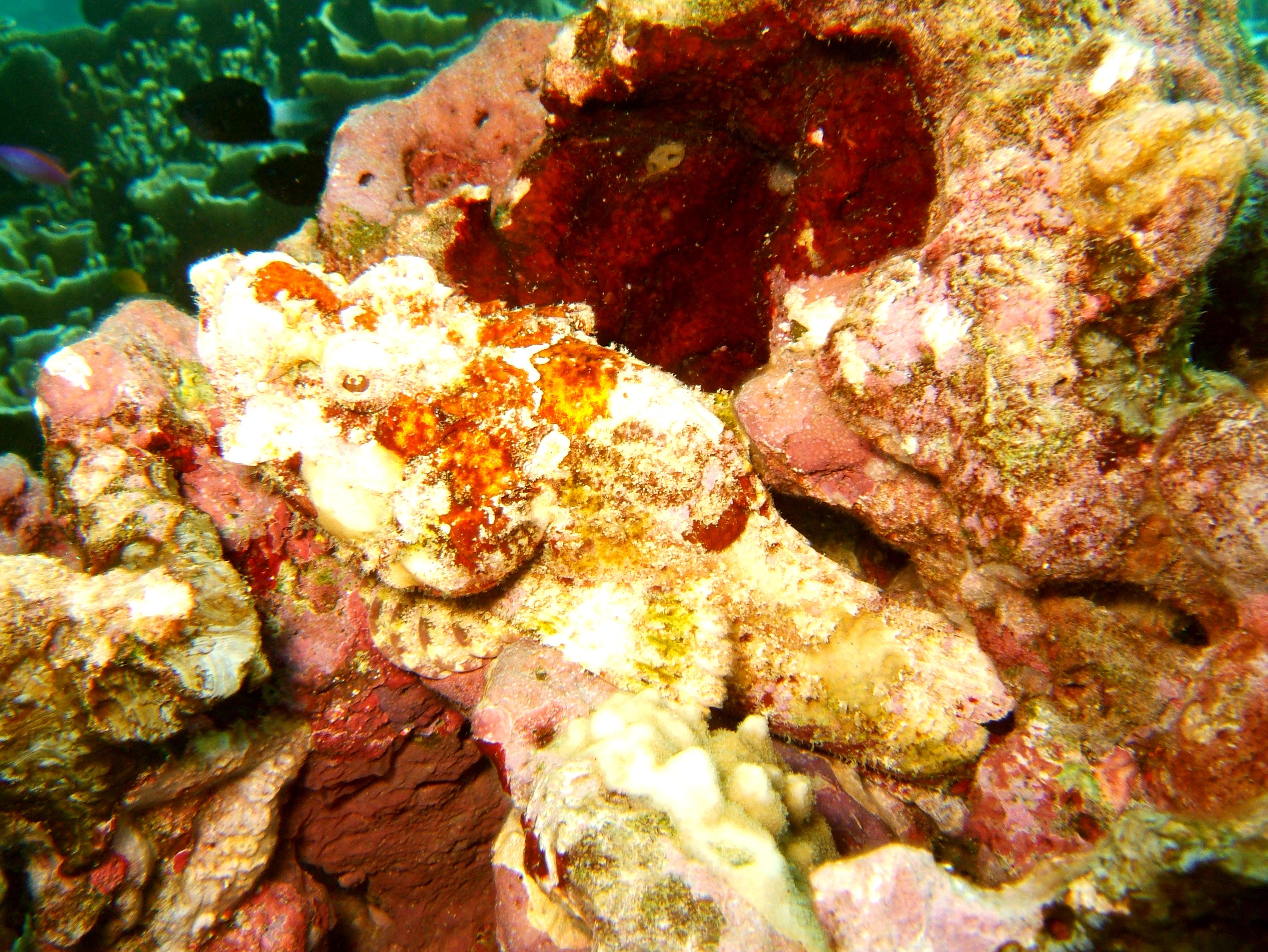 Philippines Cebu Moal Boal 20051227 Dive 1 Pescador Island 32