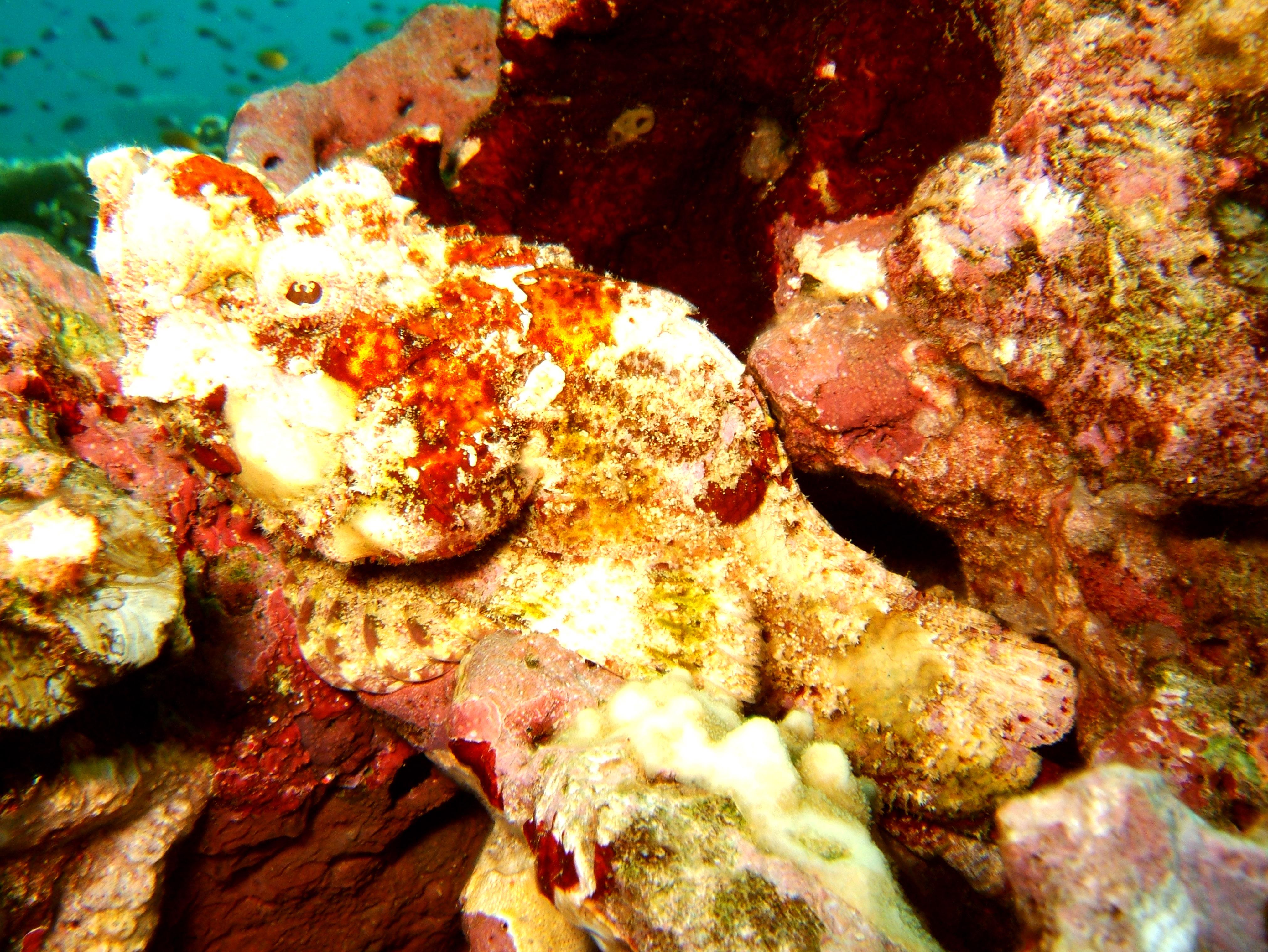 Philippines Cebu Moal Boal 20051227 Dive 1 Pescador Island 34