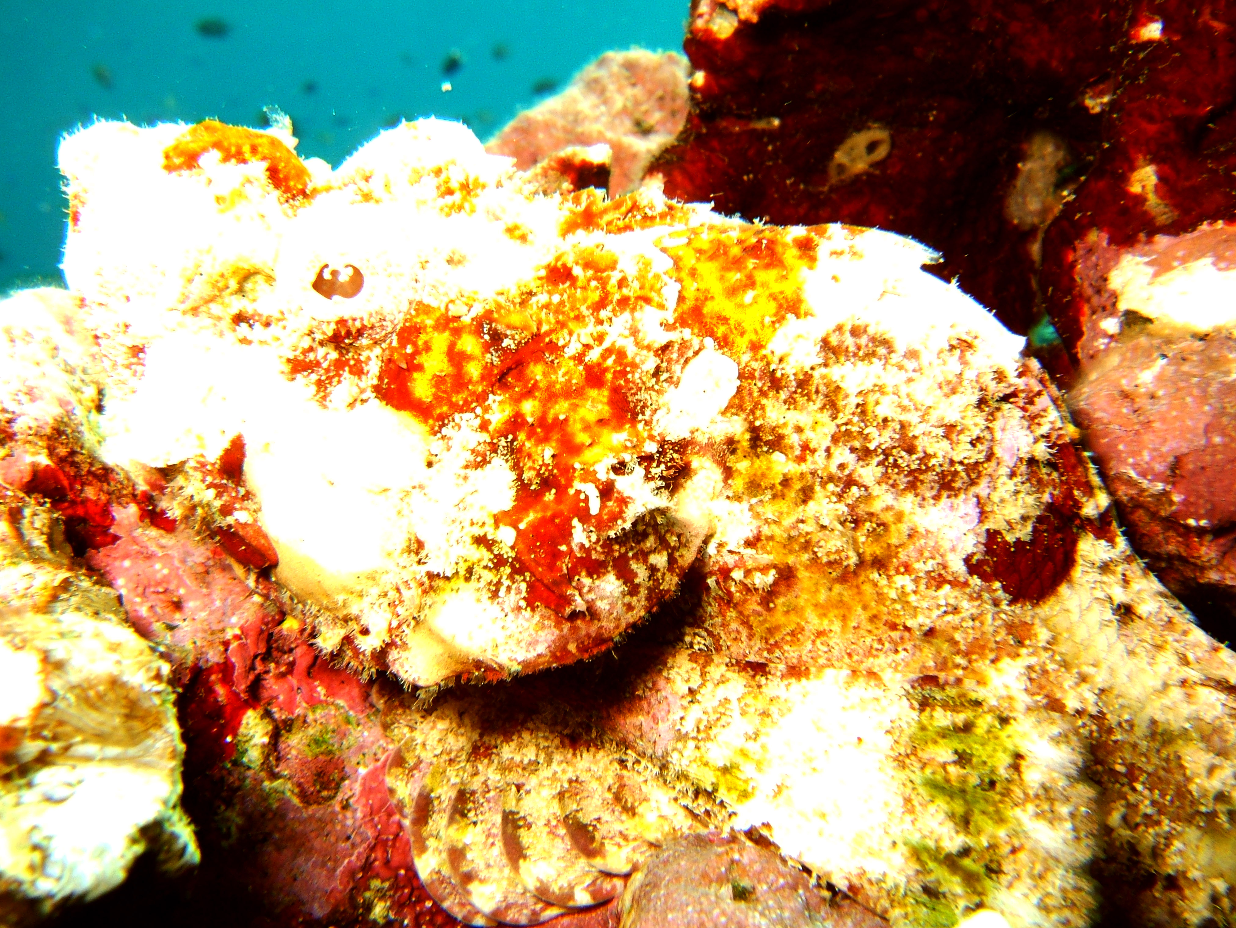 Philippines Cebu Moal Boal 20051227 Dive 1 Pescador Island 38