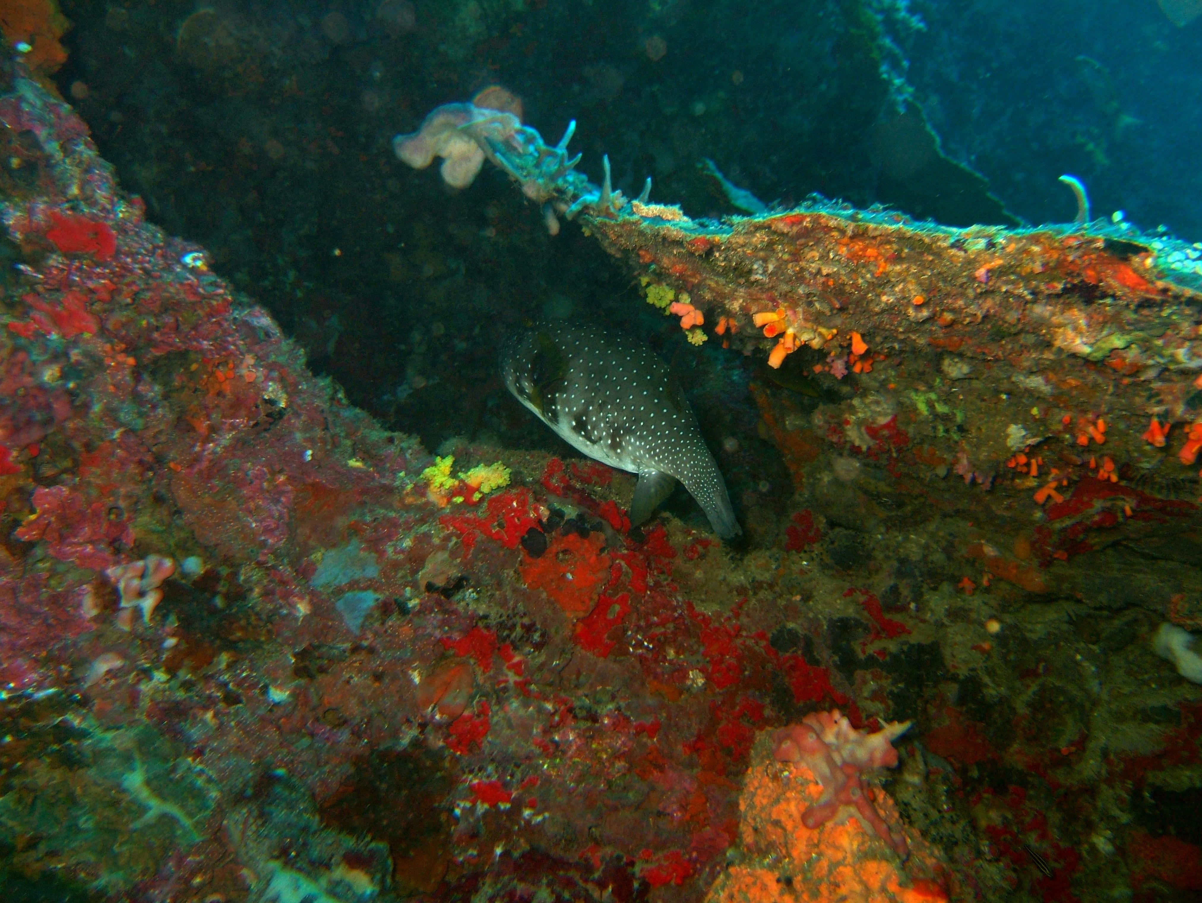 Philippines Cebu Moal Boal 20051227 Dive 1 Pescador Island 45