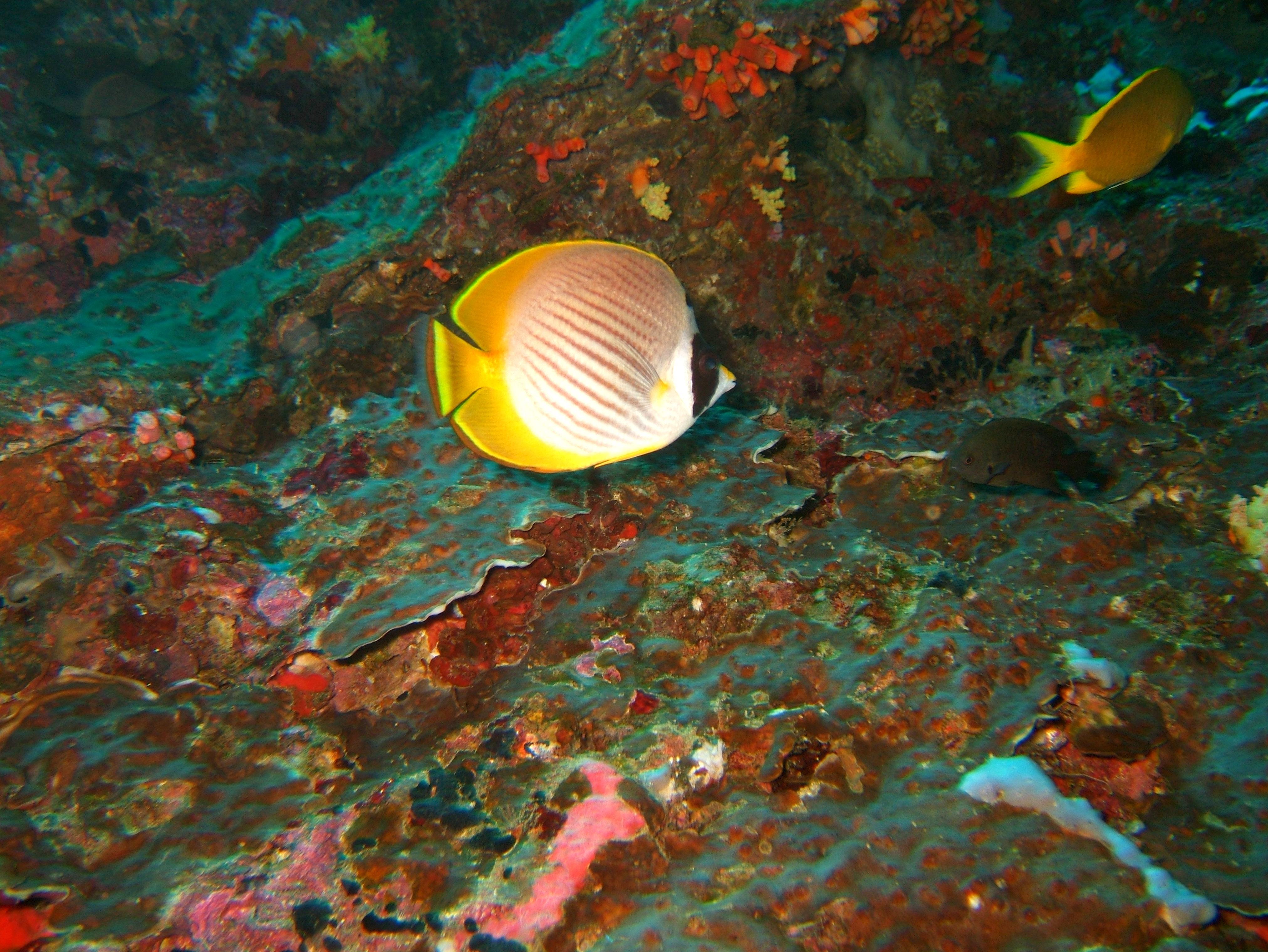 Philippines Cebu Moal Boal 20051227 Dive 1 Pescador Island 49