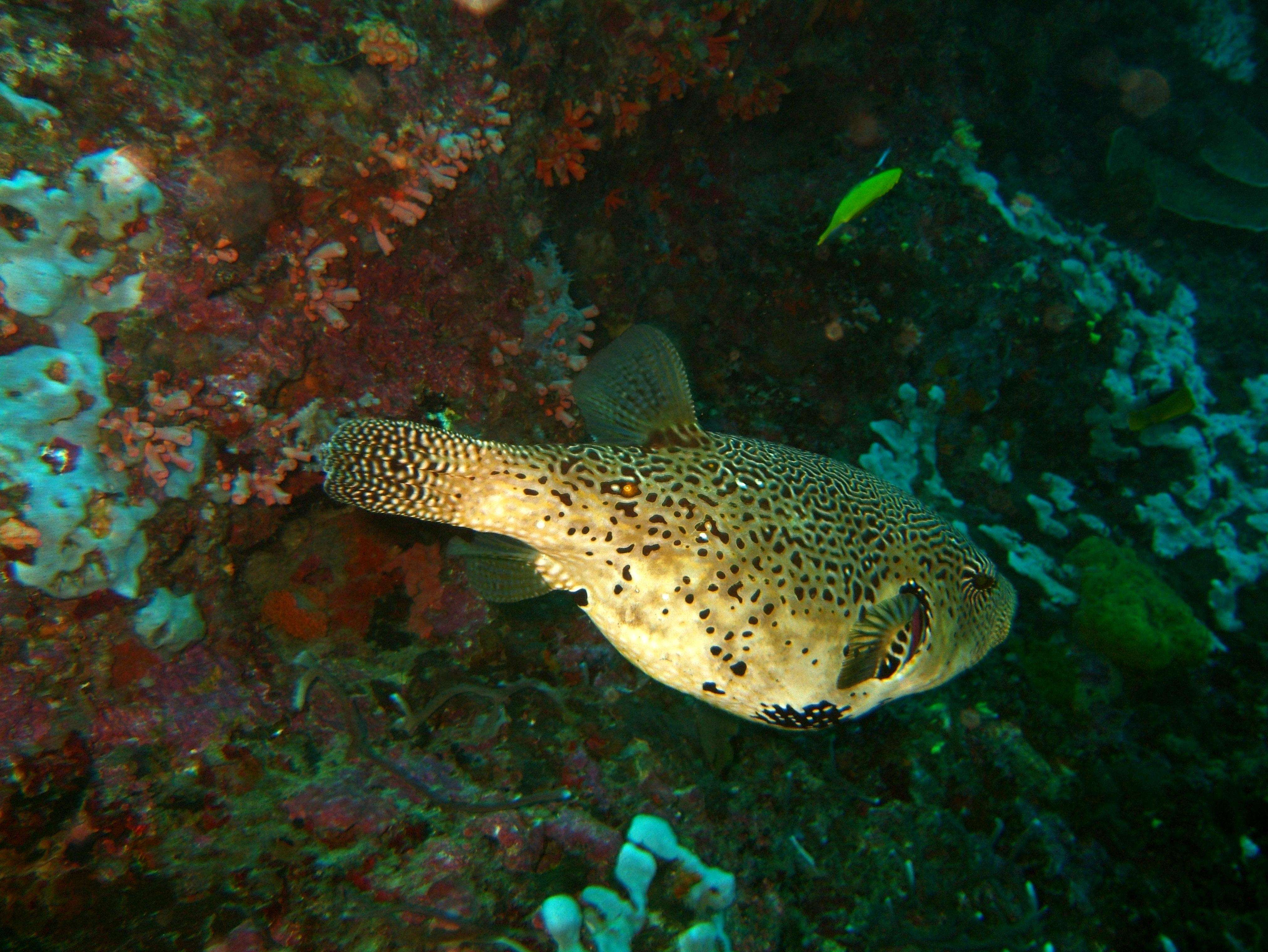 Philippines Cebu Moal Boal 20051227 Dive 1 Pescador Island 53
