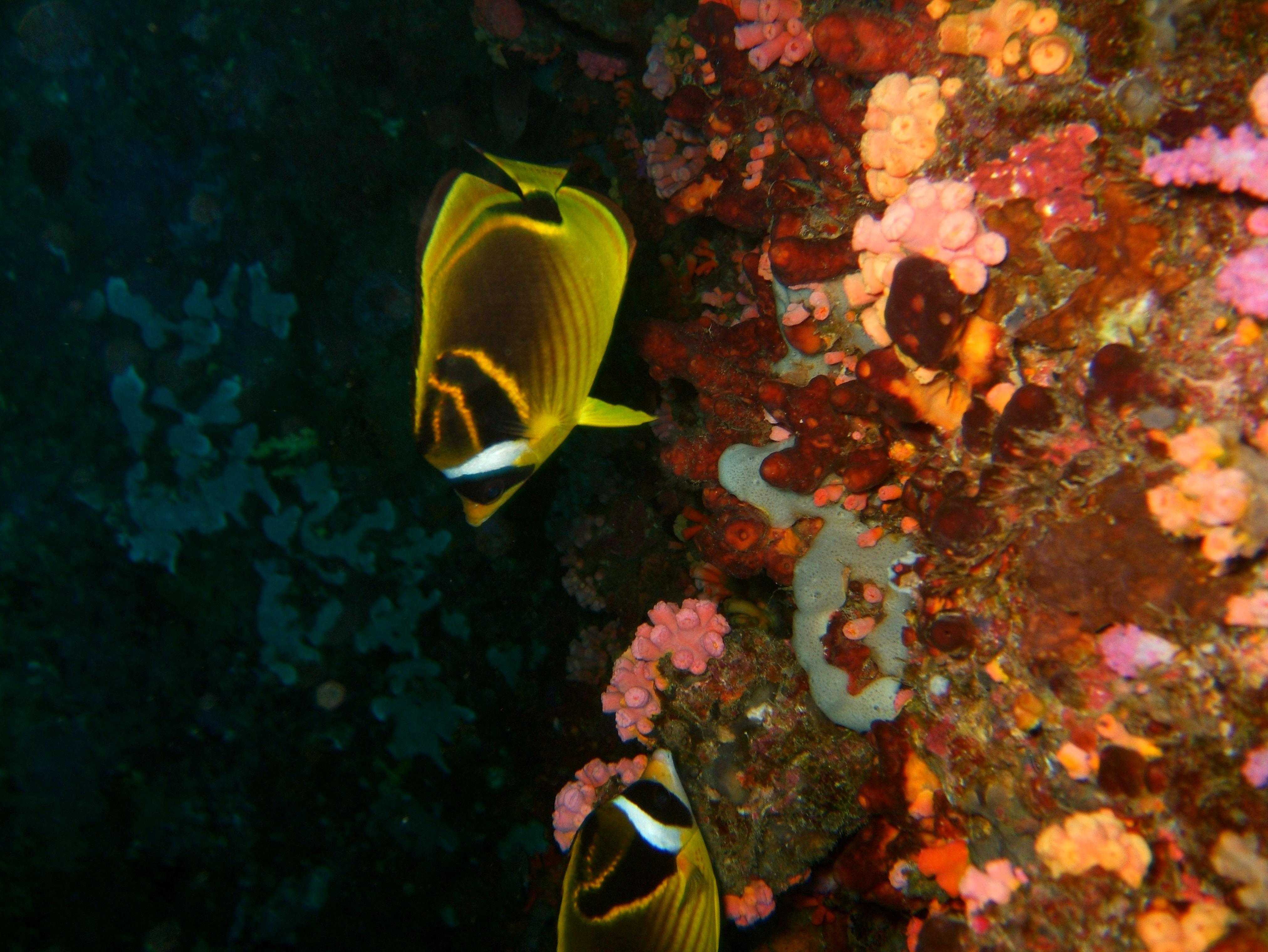 Philippines Cebu Moal Boal 20051227 Dive 1 Pescador Island 62