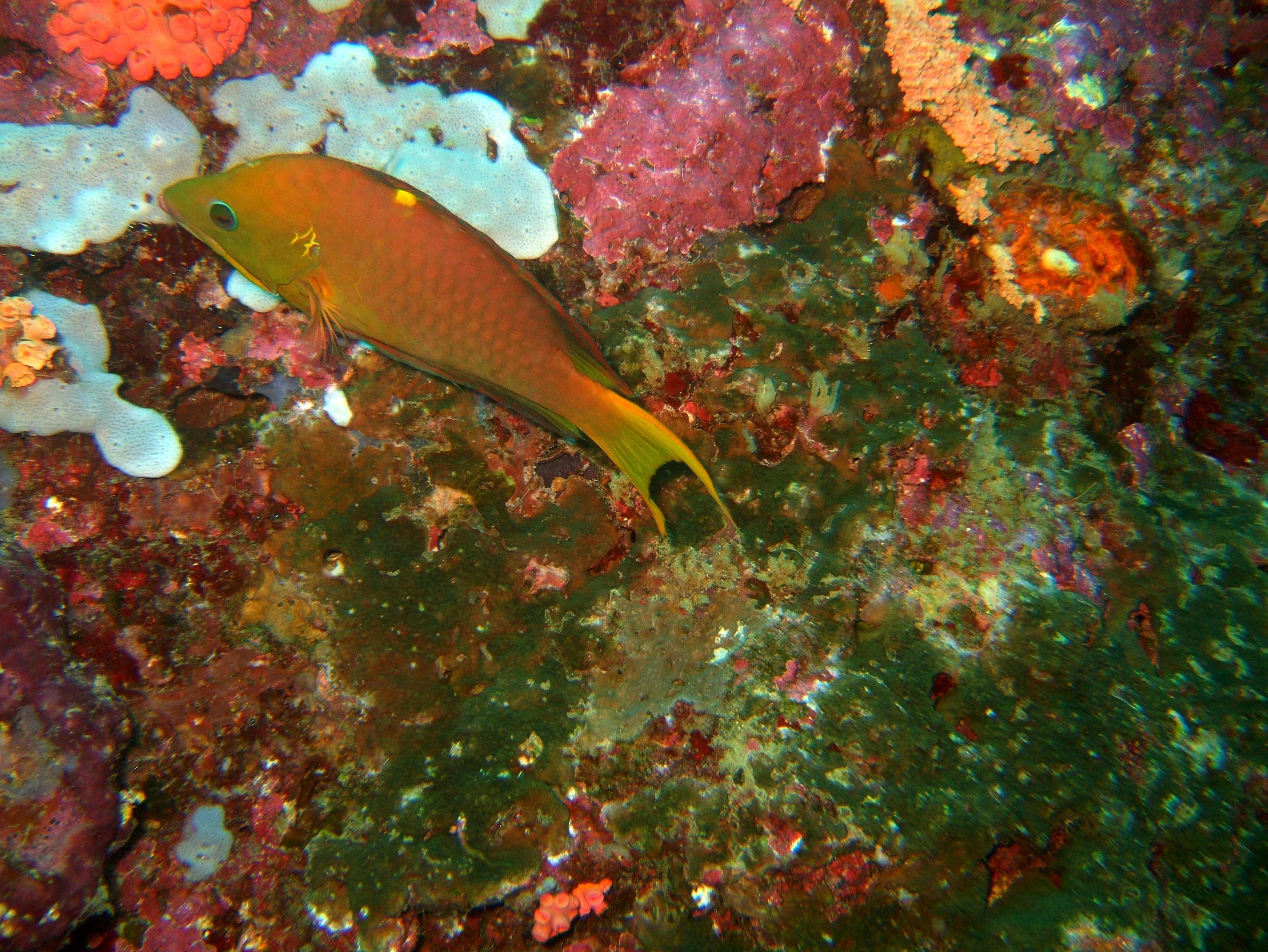 Philippines Cebu Moal Boal 20051227 Dive 1 Pescador Island 63