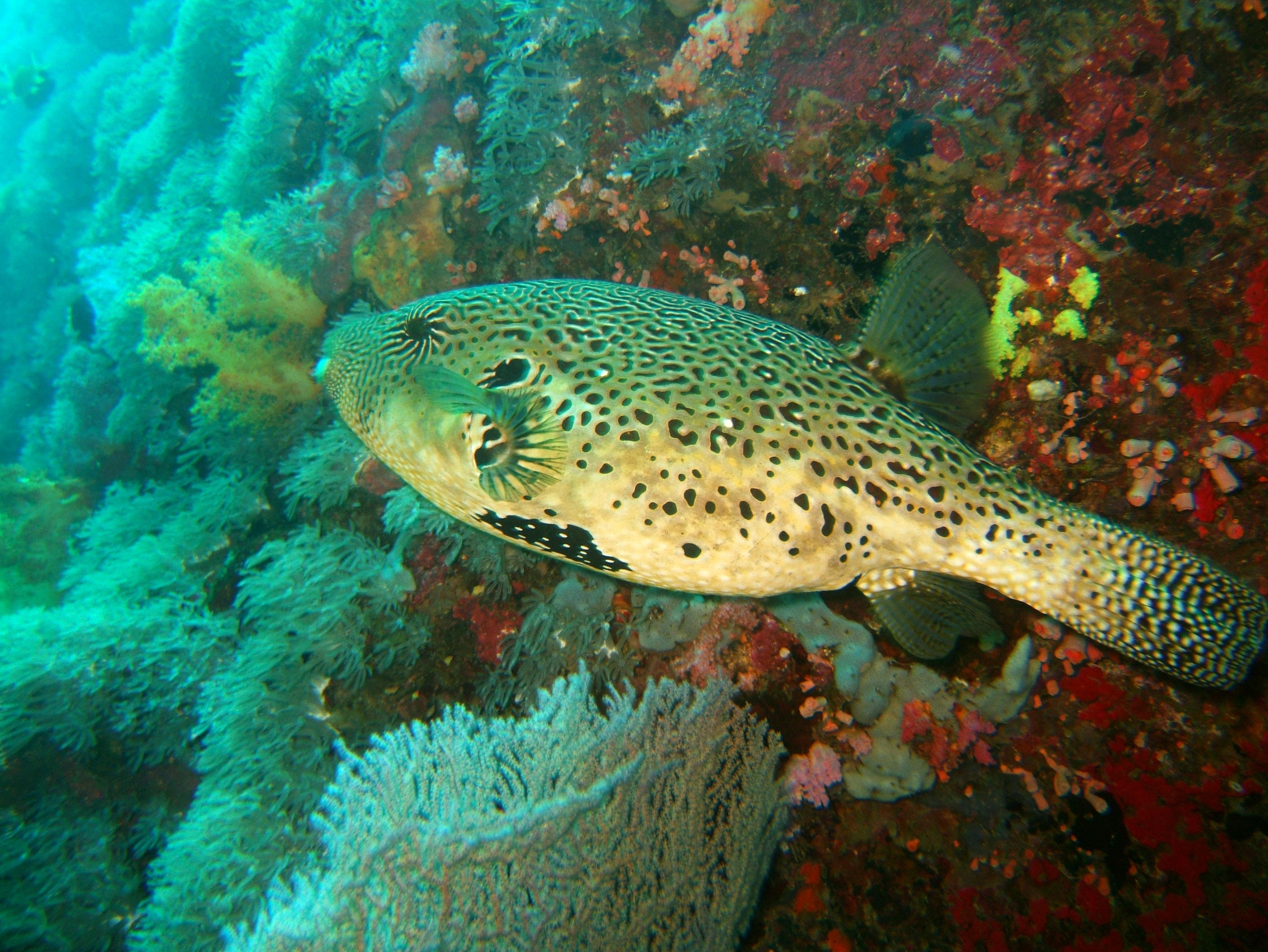 Philippines Cebu Moal Boal 20051228 Dive 1 Pescador Island 11