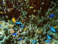 Philippines Cebu Moal Boal 20051227 Dive 1 Pescador Island 01