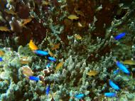 Asisbiz Philippines Cebu Moal Boal 20051227 Dive 1 Pescador Island 01