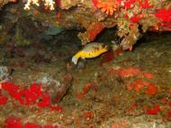Philippines Cebu Moal Boal 20051227 Dive 1 Pescador Island 05