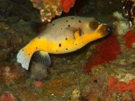 Asisbiz Philippines Cebu Moal Boal 20051227 Dive 1 Pescador Island 06
