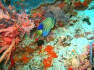 Asisbiz Philippines Cebu Moal Boal 20051227 Dive 1 Pescador Island 08