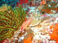 Asisbiz Philippines Cebu Moal Boal 20051227 Dive 1 Pescador Island 10