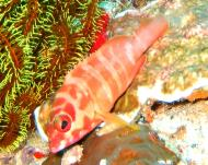 Philippines Cebu Moal Boal 20051227 Dive 1 Pescador Island 11