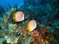 Asisbiz Philippines Cebu Moal Boal 20051227 Dive 1 Pescador Island 17