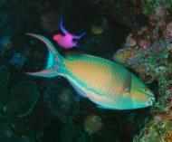 Philippines Cebu Moal Boal 20051227 Dive 1 Pescador Island 23