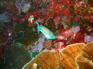 Philippines Cebu Moal Boal 20051227 Dive 1 Pescador Island 24