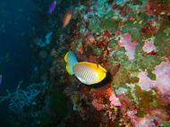 Philippines Cebu Moal Boal 20051227 Dive 1 Pescador Island 25