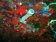 Philippines Cebu Moal Boal 20051227 Dive 1 Pescador Island 31