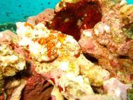 Philippines Cebu Moal Boal 20051227 Dive 1 Pescador Island 33