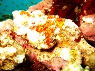 Asisbiz Philippines Cebu Moal Boal 20051227 Dive 1 Pescador Island 35