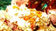 Asisbiz Philippines Cebu Moal Boal 20051227 Dive 1 Pescador Island 36