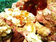Asisbiz Philippines Cebu Moal Boal 20051227 Dive 1 Pescador Island 37