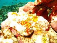 Asisbiz Philippines Cebu Moal Boal 20051227 Dive 1 Pescador Island 39