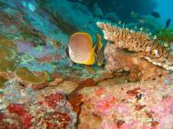 Asisbiz Philippines Cebu Moal Boal 20051227 Dive 1 Pescador Island 40