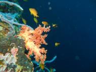 Asisbiz Philippines Cebu Moal Boal 20051227 Dive 1 Pescador Island 41