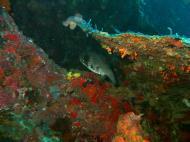 Asisbiz Philippines Cebu Moal Boal 20051227 Dive 1 Pescador Island 45