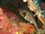 Asisbiz Philippines Cebu Moal Boal 20051227 Dive 1 Pescador Island 46