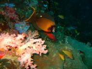 Philippines Cebu Moal Boal 20051227 Dive 1 Pescador Island 47