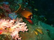 Asisbiz Philippines Cebu Moal Boal 20051227 Dive 1 Pescador Island 47