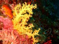 Philippines Cebu Moal Boal 20051227 Dive 1 Pescador Island 48