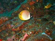 Asisbiz Philippines Cebu Moal Boal 20051227 Dive 1 Pescador Island 49