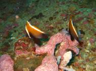 Asisbiz Philippines Cebu Moal Boal 20051227 Dive 1 Pescador Island 50