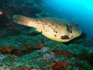 Asisbiz Philippines Cebu Moal Boal 20051227 Dive 1 Pescador Island 52